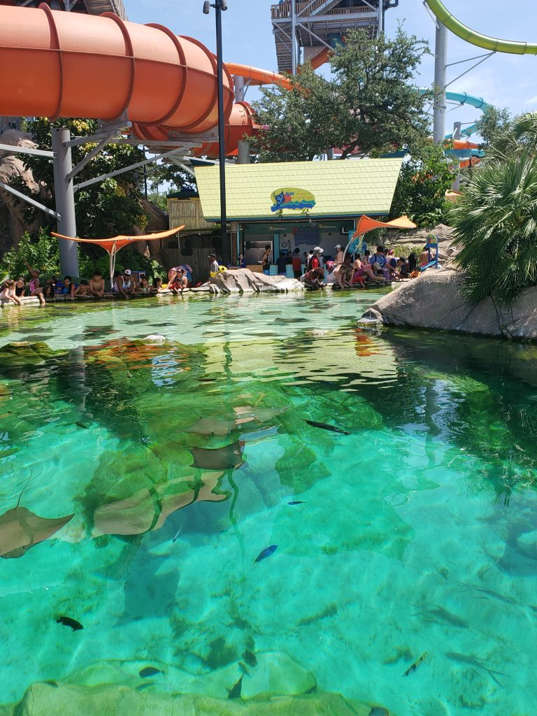 Stingray Feeding area